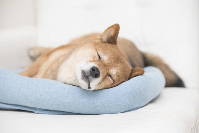 ペット用ベッドの上で寝る犬