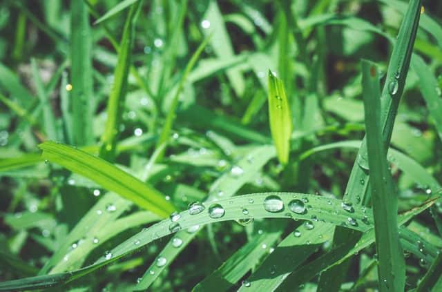 露のついた植物